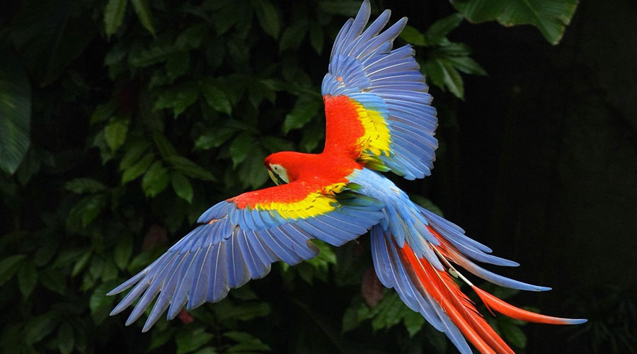 Macaws-01
