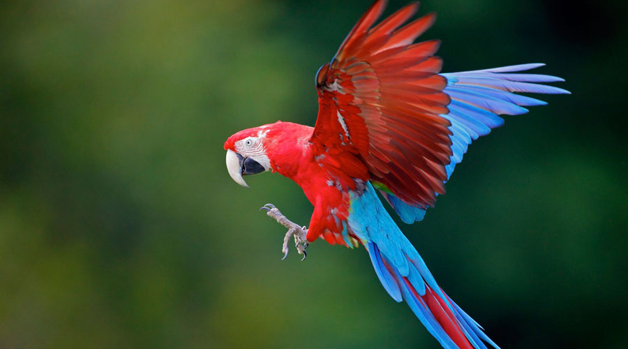 Macaws-02