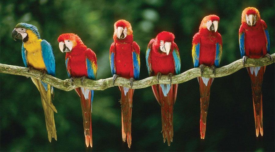 Macaws-04